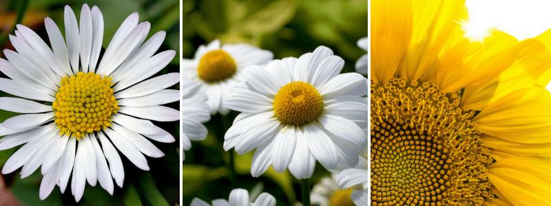 sunflower spirals solar power plant efficiency