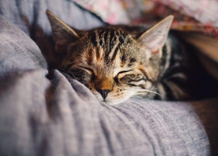 Sleep detoxifies