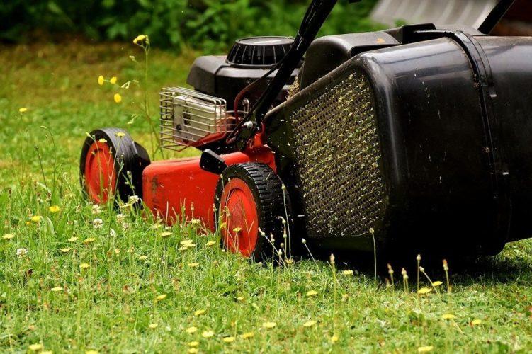 Lawn mower turf lawn alternatives