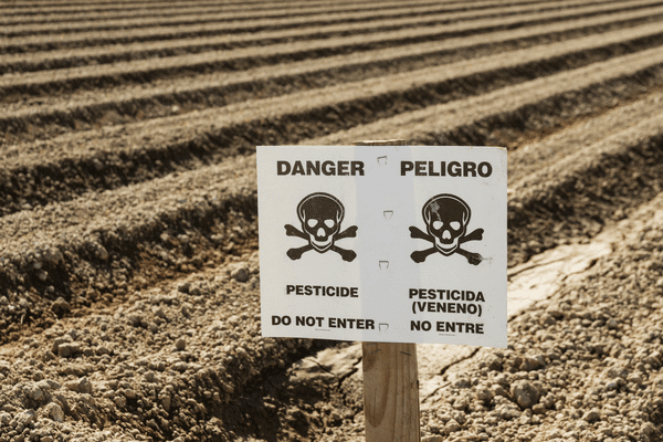 Field of genetically modified food crops sprayed with glyphosate